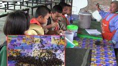 กองทัพแมลงวันบุกโรงเรียน ครู-นร.เดือดร้อนหนัก