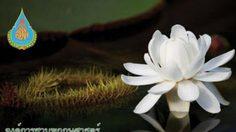 ประกวดภาพถ่ายชิงถ้วยพระราชทาน มหัศจรรย์พรรณไม้งามฯ ครั้งที่ 2