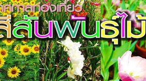 เทศกาล ท่องเที่ยวสีสันพันธุ์ไม้ ปี 2556 จ.สุพรรณบุรี