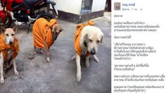 ศิลปินแห่งชาติ แจงดราม่า 'หมาห่มจีวร' ยันครูภาษาไทยรู้ไม่ได้ด่าพระ