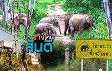 ป่า ช้าง  คน… สันติ