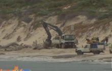 อาสาสมัครช่วยเหลือวาฬเกยตื้นในออสเตรเลีย