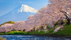 มาแล้ว! พยากรณ์ช่วงเวลาซากุระบานที่ญี่ปุ่น ปี 2017