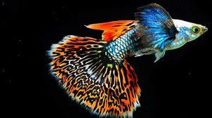 ตระการตา พันธุ์ปลา เทวดานางฟ้า ในงาน วันประมงน้อมเกล้าฯ ครั้งที่ 27