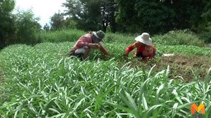 รัฐเตรียมจัดที่ดินภาคอีสานให้ผู้ยากไร้ทำกินกว่า 1,400 ไร่