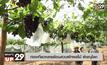 ท่องเที่ยวคลายร้อนสวนผักผลไม้ พิษณุโลก