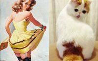 จับแมวมาเป็นนางแบบ Pin-Up เมื่อเจ้าเหมียวโพสท่าได้เหมือนนางแบบมืออาชีพ