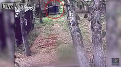 สยอง! หนุ่มรัสเซียเมาถูกหมีกัดแขนขาด หลังอุตริปีนไปให้อาหารมันใกล้ประชิด