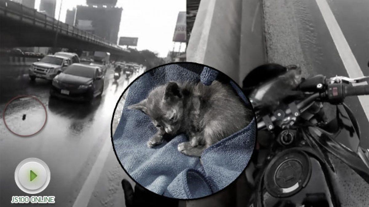 บิ๊กไบค์ใจหล่อ ช่วยลูกแมวกลางสะพานตากสิน (19-10-60)
