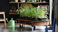 5 เคล็ดลับเพื่อ การปลูกผักที่บ้าน