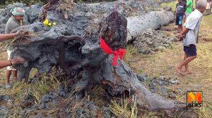 ฮือฮา! พบต้นตะเคียนโบราณยักษ์อายุหลายร้อยปี คอหวยไม่พลาดแห่ขอเลขเพียบ!!