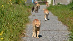 รู้สักที! เส้นทางการเดินของแมวในแต่ละวัน มันไปไหนมาบ้าง?