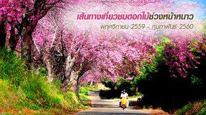 เส้นทางเที่ยวชมดอกไม้ช่วงหน้าหนาว พฤศจิกายน 2559 – กุมภาพันธ์ 2560