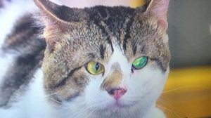 ความเชื่อเรื่องแมวตาเพชร เรื่องเล่าเขย่าจอ เสาร์นี้
