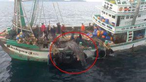 สาวเผยพบเรือลากอวน จับปลาฉลามวาฬ ที่ จ.ภูเก็ต