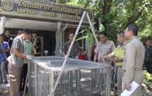 เตรียมฉีดวัคซีนป้องกันโรคพิษสุนัขบ้าให้ลิงลพบุรี