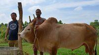 ฮือฮาเปิดตัววัวชนคู่ประวัติศาสตร์ ระหว่างไทย - จีน วงเงินเดิมพัน 4 ล้านบาท