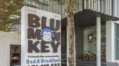 Blu Monkey Bed & Breakfast โฮสเทลสุดชิค จ.ภูเก็ต