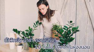 10 ต้นไม้ ปลูกได้ในห้องนอน ช่วยแก้นอนไม่หลับ กำจัดโรค นักวิทย์ฯ นาซ่า คอนเฟิร์ม!