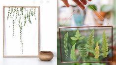 20 ไอเดีย ตกแต่งบ้าน ด้วย ดิสเพลย์กรอบกระจกพืชไม้ ให้สวยชิค