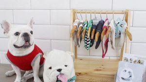 ธุรกิจเจาะตลาดออนไลน์ เสื้อสำหรับสุนัขคู่ใจ ดังไกลส่งออกนอก!