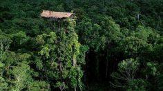 บ้านต้นไม้ สุดสูงท่ามกลางป่าไม้ใน ประเทศอินโดนีเซีย