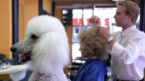 14 Photos of Disliked Haircuts your Pets would Protest