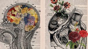 ชีวิตใหม่บนหนังสือเก่า ที่จะสอนให้รู้จักระบบร่างกาย Anatomi อย่างละเอียด