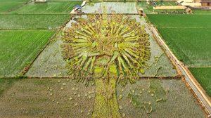 สวยขั้นเทพ! ศิลปะบนนาข้าว 3 มิติ ฝีมือเกษตรกร ชาวจีน