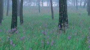 ปีนภูดูทะเลดอกไม้ในป่าสน บนภูสอยดาว จ.อุตรดิตถ์