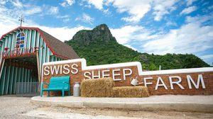 Swiss Sheep Farm เที่ยวฟาร์มน้องแกะ ชะอำ