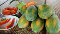 เกษตรกรปลูกมะละกอ 'เรดเลดี้' สร้างรายได้เดือนละ 250,000 บาท