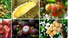 20 สวนผลไม้ ภาคตะวันออก อร่อยทุกไร่ ชิมไปทุกสวน