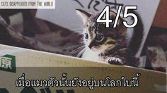 รีวิวภาพยนตร์ If Cats Disappeared from the World เมื่อแมวตัวนั้นยังอยู่บนโลกนี้