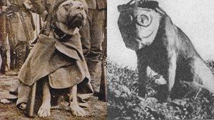 ฮีโร่ตัวจริง! สทูบบี้ (Stubby) สุนัขทหารตัวแรกของโลก