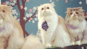 """คาเฟ่แมวที่คุณต้องลองไป """"The Coffee Cat"""""""