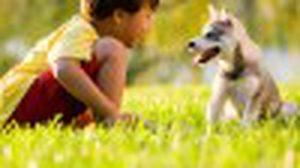 5 ข้อ ควรคิด ก่อนให้ ลูก เลี้ยงสุนัข