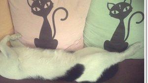 ริยาจ หัวหิน รีสอร์ทของคนรักแมว
