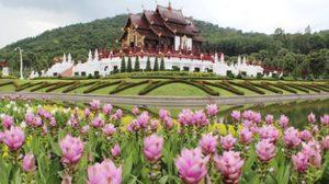 เทศกาลชมสวนฤดูฝน ณ อุทยานหลวงราชพฤกษ์