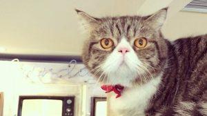 คาเฟ่แมว Caturdaycatcafe เจอตัวจริง แคทฉับ (Katchup) ได้ที่นี่