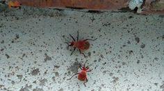 แตกตื่น! พบแมลงหน้าคนโผล่ที่บนบันไดพญานาคพระธาตุจอมทอง