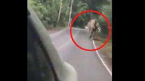รุมสับคนขับคัมรี่!! หลังยั่วช้างป่าจนโมโห ก่อนซิ่งรถหนี