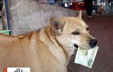 """""""เจ้าไก่"""" สุนัขแสนรู้ขอเงินซื้อขนม จ.นครราชสีมา"""