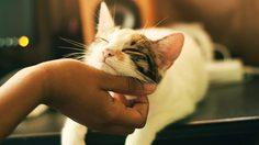 วิธีบอกรักแมว 8 วิธี ที่จะทำให้ แมวรักแมวหลง แมวไม่รักแต่เราก็รักแมว