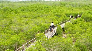เที่ยวหน้าฝน ชม ป่าโกงกาง 100 ปี – วนอุทยานปราณบุรี ประจวบคีรีขันธ์