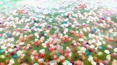 อัศจรรย์ธรรมชาติ แมงกระพรุนหลากสี ณ ทะเลตราด