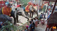 ชื่มมื่น!! เลี้ยงโต๊ะจีนช้างฉลองช้างเกิดใหม่ จ่อคิวคลอดอีก 5 เชือก