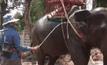 ฉีดน้ำคลายร้อนให้ช้างกว่า 250 เชือก