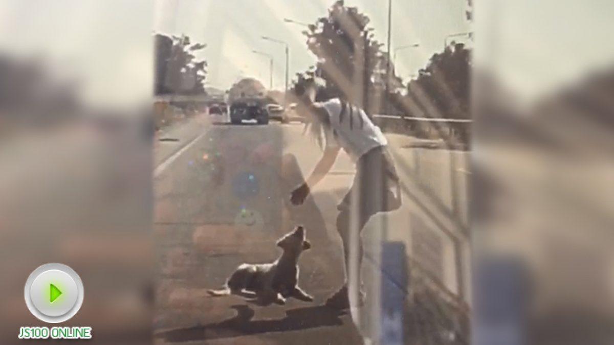 สุนัขถูกรถชนขาหลังหัก! นอนบาดเจ็บกลางถนน (11-12-60)