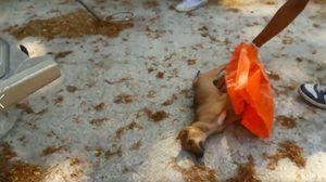 Set Zero? ปศุสัตว์วางยาเบื่อ ฆ่าหมาทั้งวัด ที่นครศรีฯ